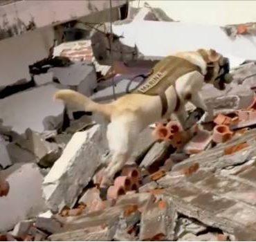Unidad Canina Rescata Personas