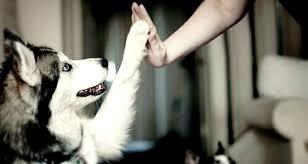 El perro es el mejor amigo del hombre, también en la genética