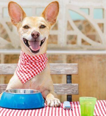 ¿Es mejor alimentar a las mascotas con comida casera o comida procesada?